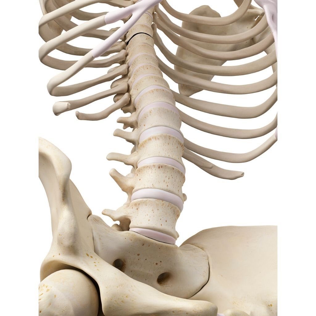 Osteoporosis and exercise…The facts